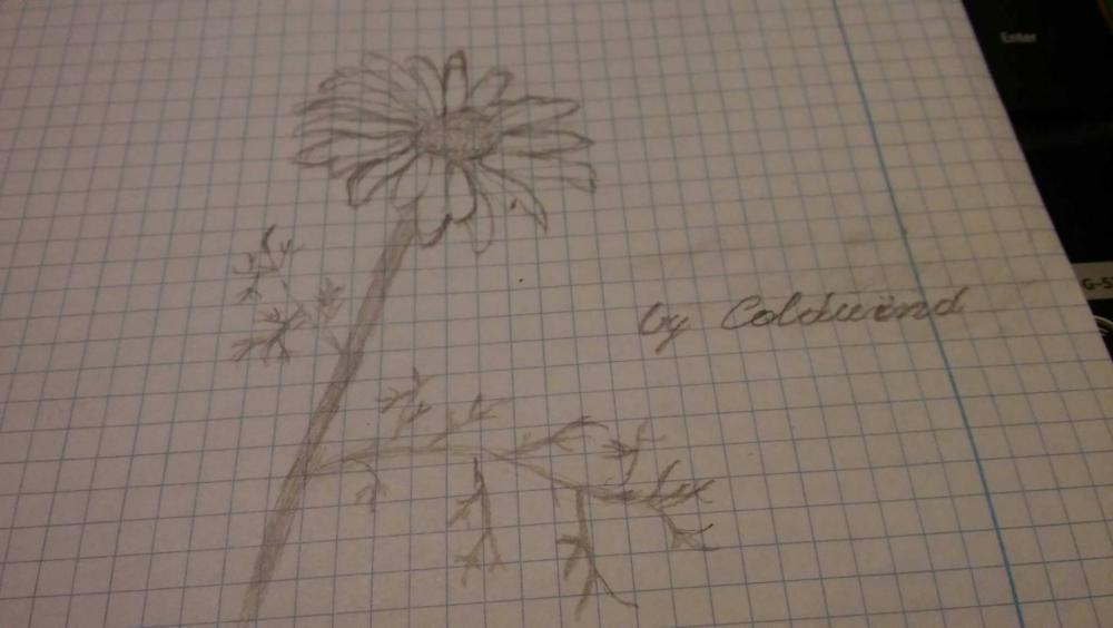flower.thumb.jpg.dc8366548c586bebe94317f3ffd8e493.jpg